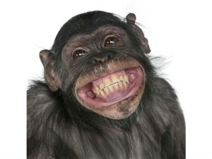 chimpanzee-altruism_7212 - Copy