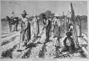 slavescottonculture-1875