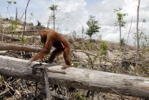 forestpalm-oil-plantation