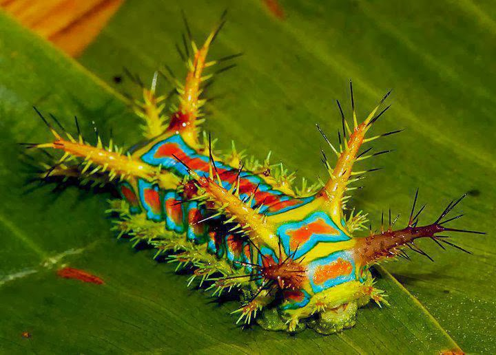 Awe And Wonder  The Most Beautiful Insects Imaginable -3954
