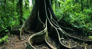 rainforest-19587_1280x689