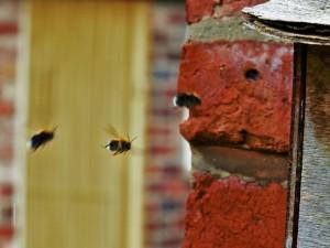 bee drones 2