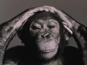 Chimp elitismstyle_chimpanzee