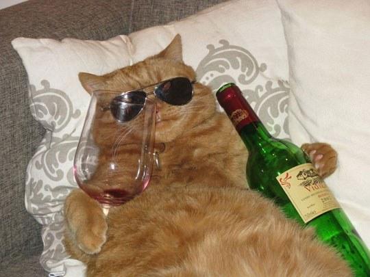 a-funny-cat-glass-wine-bottle