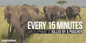 GP elephant