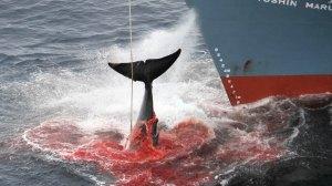 save-whalemaxresdefault