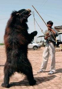 dancing-bear-2