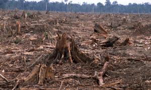 deforestation-causes-HI_104236