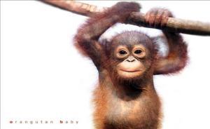 orangutanFBL_img_FU_4140_middle
